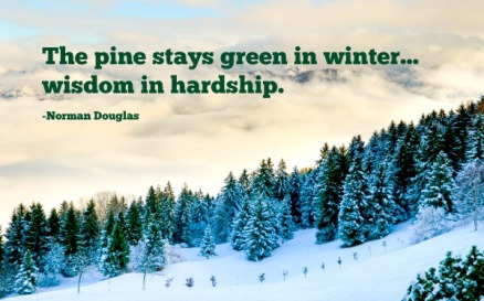 Douglas-quote-The-pine-stays-green....jpg